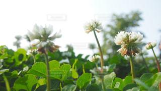 近くの花のアップの写真・画像素材[1176367]