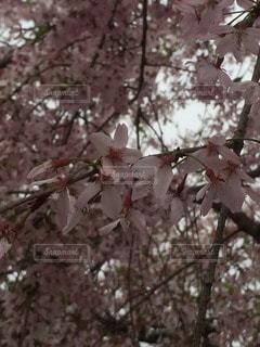 自然の写真・画像素材[37837]