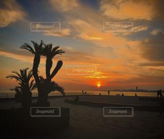 明石海峡舞子公園の写真・画像素材[1165850]
