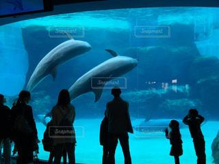 名古屋港水族館 巨大水槽の写真・画像素材[1166831]