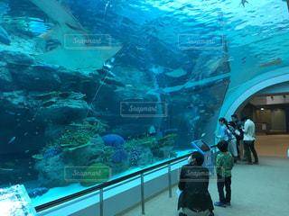 名古屋港水族館 水中トンネルの写真・画像素材[1166836]