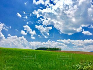 夏の北海道の写真・画像素材[1169705]
