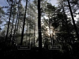 森の朝の写真・画像素材[1169725]