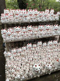 豪徳寺の招き猫の写真・画像素材[1167404]