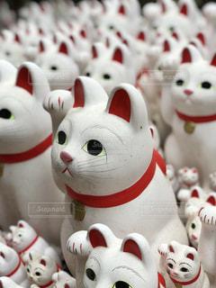 豪徳寺の招き猫の写真・画像素材[1167408]