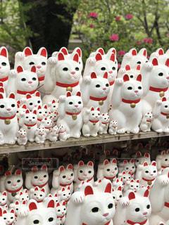 豪徳寺の招き猫の写真・画像素材[1167410]