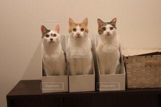 猫の写真・画像素材[1175481]