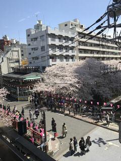 春の写真・画像素材[431402]
