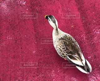 Disneyにいる鳥の写真・画像素材[1166308]