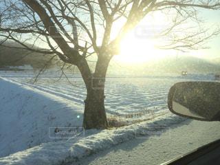 冬の朝の写真・画像素材[1166054]