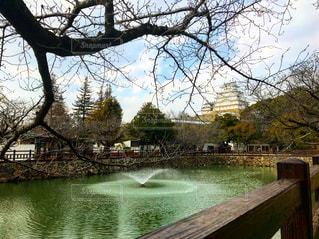 木々 に囲まれた水の体の横にあるベンチの写真・画像素材[1166165]