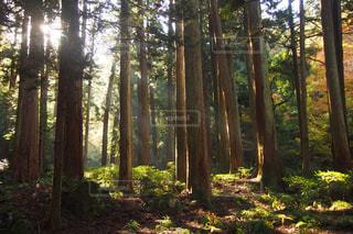 森の写真・画像素材[1166403]