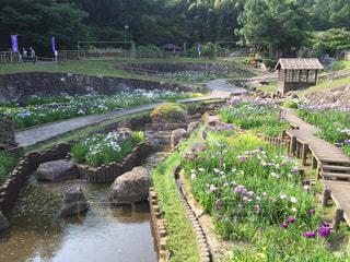 背景の水の庭の写真・画像素材[1167071]