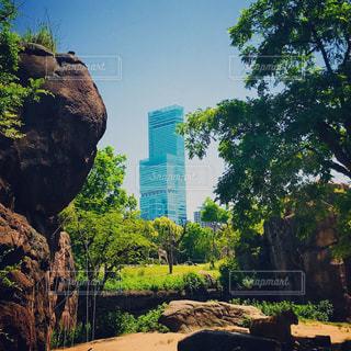 天王寺動物園とあべのハルカスの写真・画像素材[1167092]