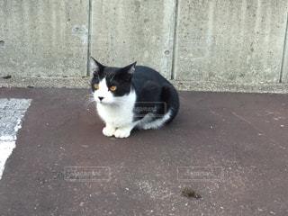 白い建物の上に座っている黒い猫の写真・画像素材[1339352]