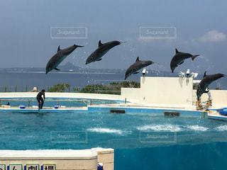 水の体の上を飛んでカモメの群れの写真・画像素材[1168929]
