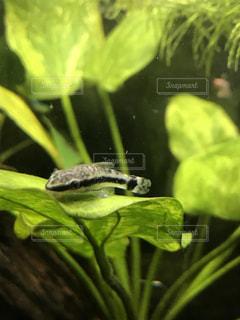 近くにカエルのアップの写真・画像素材[1169832]