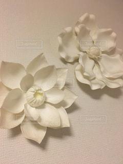 壁と花の写真・画像素材[1180023]
