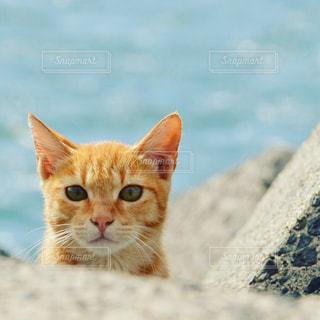 港でくらす猫さんの写真・画像素材[1168482]
