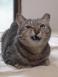 不機嫌な猫 - No.1169010