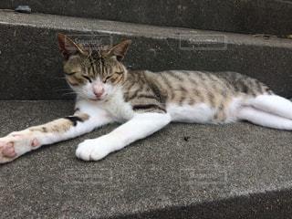 地面に横になっている猫の写真・画像素材[1169843]