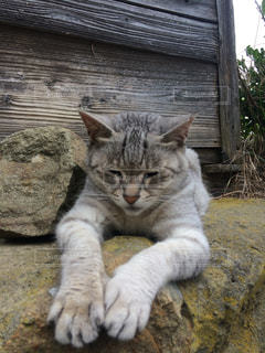 座っている猫の写真・画像素材[1169844]