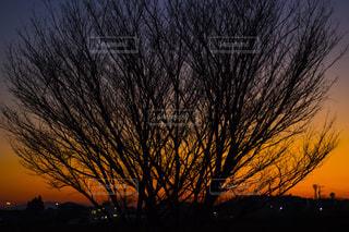 何気ない木の写真・画像素材[1168846]