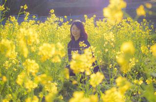 お花さんの写真・画像素材[1169029]