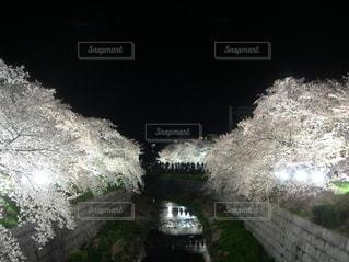 夜桜見物 - No.1171660