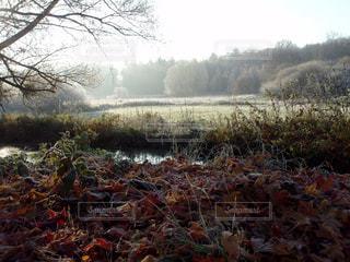 霜の降りた落葉と草原・山の写真・画像素材[1172096]