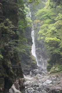 森の中の大きな滝 - No.1189005