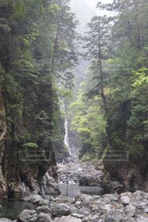 森を流れる川の写真・画像素材[1189006]