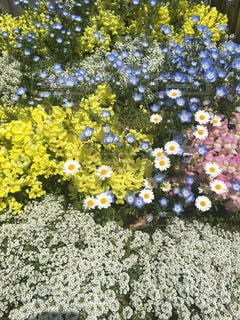 小花の集合の写真・画像素材[1191677]