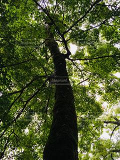 緑の木漏れ日の写真・画像素材[1203990]