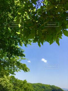 緑と青と白。の写真・画像素材[1223552]