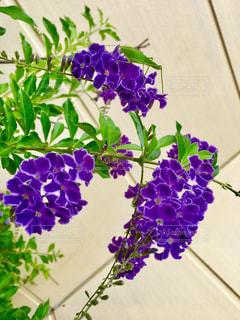紫色の花の写真・画像素材[1239986]