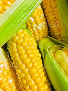 収穫したばかりのトウモロコシ。の写真・画像素材[1276420]
