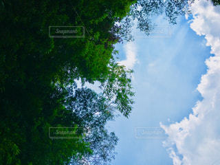 緑と青と白の写真・画像素材[1365922]