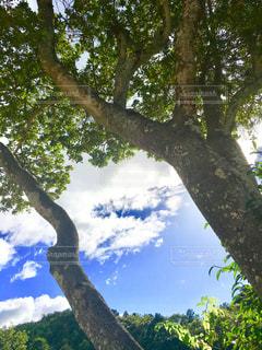 大きな木の間から。の写真・画像素材[1404694]