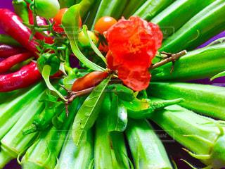 夏野菜の写真・画像素材[1426184]