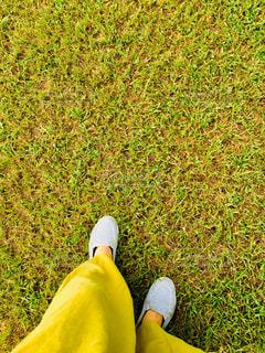 芝生の上の写真・画像素材[1428684]