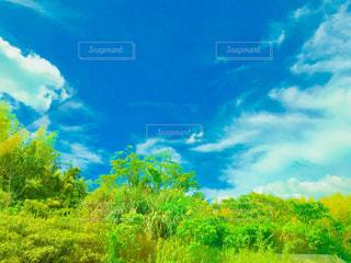青空に緑の木々の写真・画像素材[1448867]