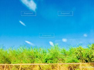 水玉の空の写真・画像素材[1458069]