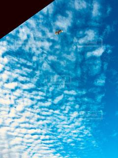 空を飛んでいる鳥の写真・画像素材[1507387]