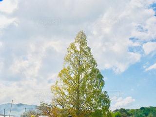 秋晴れの空の写真・画像素材[1533512]