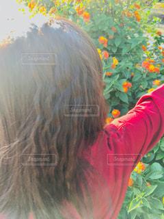 太陽に反射する髪の写真・画像素材[1595902]