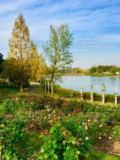緑豊かな緑のフィールドの上に座っている鳥の群れの写真・画像素材[1603669]