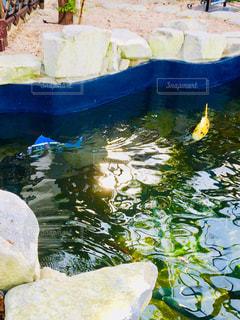 ロボットの魚の写真・画像素材[1676214]