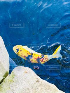ロボットの魚の写真・画像素材[1676220]