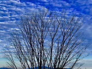 大空と大木の写真・画像素材[1702623]